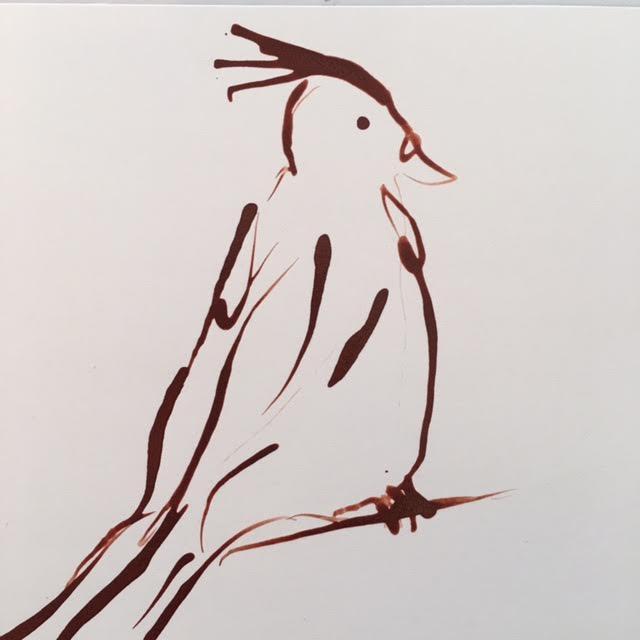 bird-9